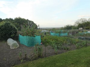 Picture of the allotments at Finche Field. Looking down over the field towards the lower allotments